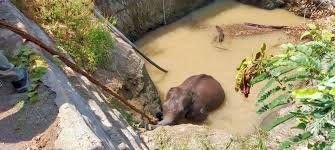 Forest personnels save elephant from a pit